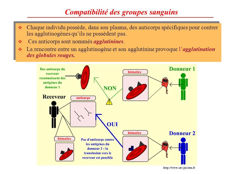 Compatibilité des groupes sanguins Chaque individu possède, dans son plasma, des anticorps spécifiques pour contrer les agglutinogènes quils ne possèd