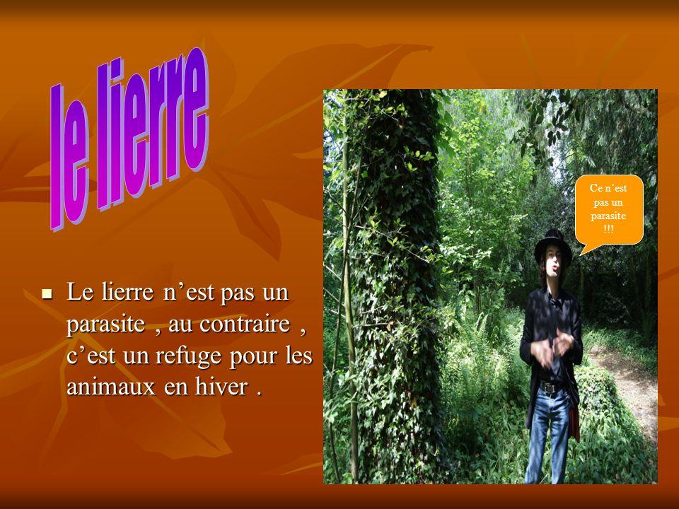 Le totem est un arbre mort qui abrite les oiseaux et qui peut leur servir de cachette.
