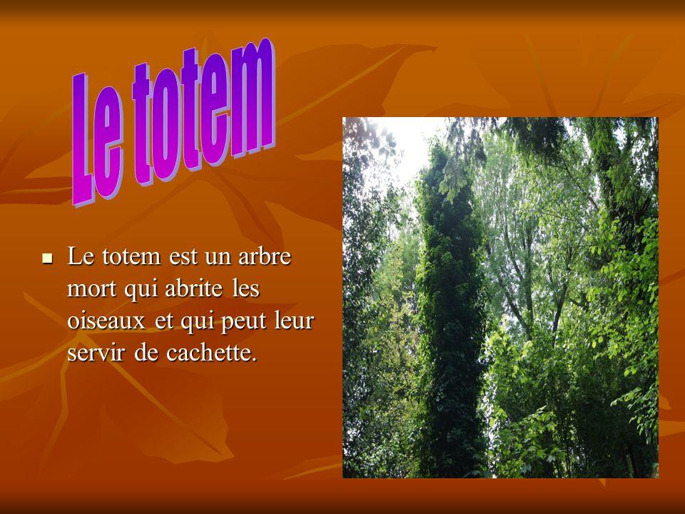 Le totem est un arbre mort qui abrite les oiseaux et qui peut leur servir de cachette. Le totem est un arbre mort qui abrite les oiseaux et qui peut l