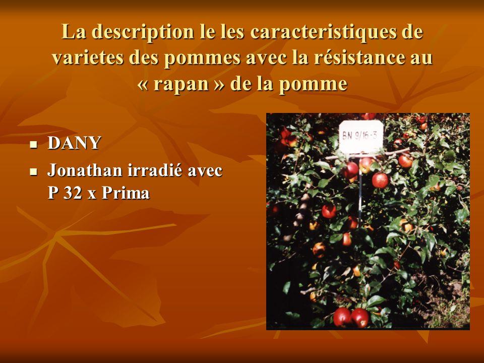 La description le les caracteristiques de varietes des pommes avec la résistance au « rapan » de la pomme DANY DANY Jonathan irradié avec P 32 x Prima Jonathan irradié avec P 32 x Prima