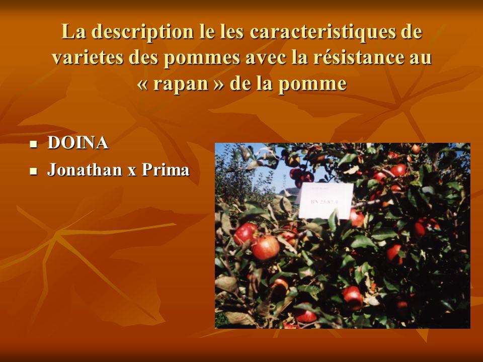 La description le les caracteristiques de varietes des pommes avec la résistance au « rapan » de la pomme ALEX ALEX Golden delicious x BN 33/39 Golden delicious x BN 33/39