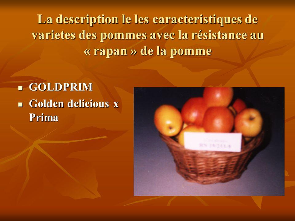 La description le les caracteristiques de varietes des pommes avec la résistance au « rapan » de la pomme GOLDPRIM GOLDPRIM Golden delicious x Prima Golden delicious x Prima