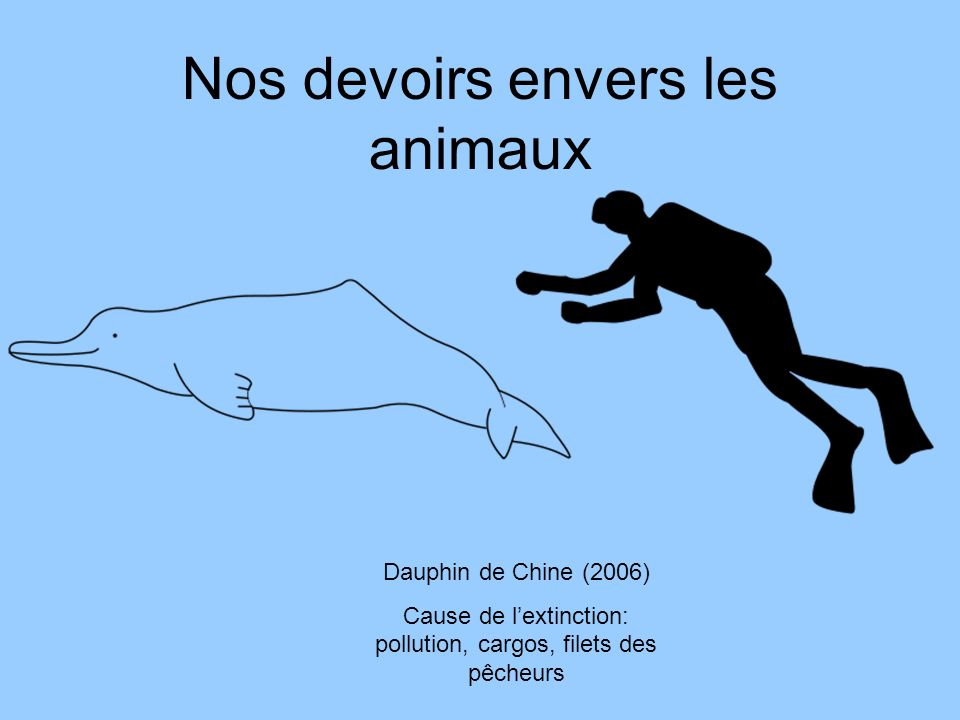 Nos devoirs envers les animaux Dauphin de Chine (2006) Cause de lextinction: pollution, cargos, filets des pêcheurs