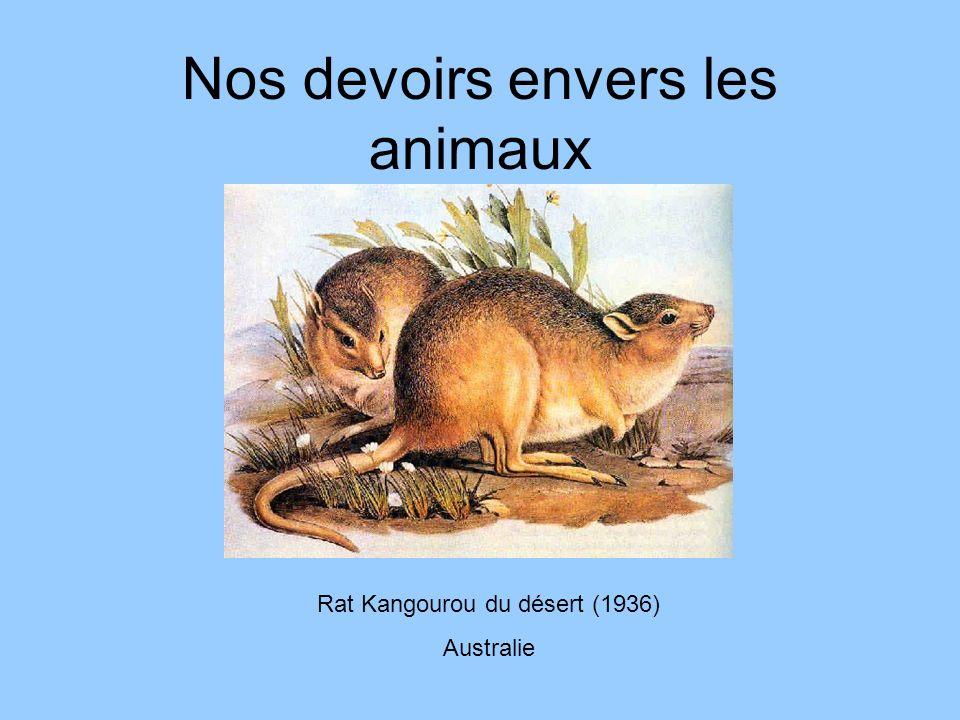 Nos devoirs envers les animaux Rat Kangourou du désert (1936) Australie