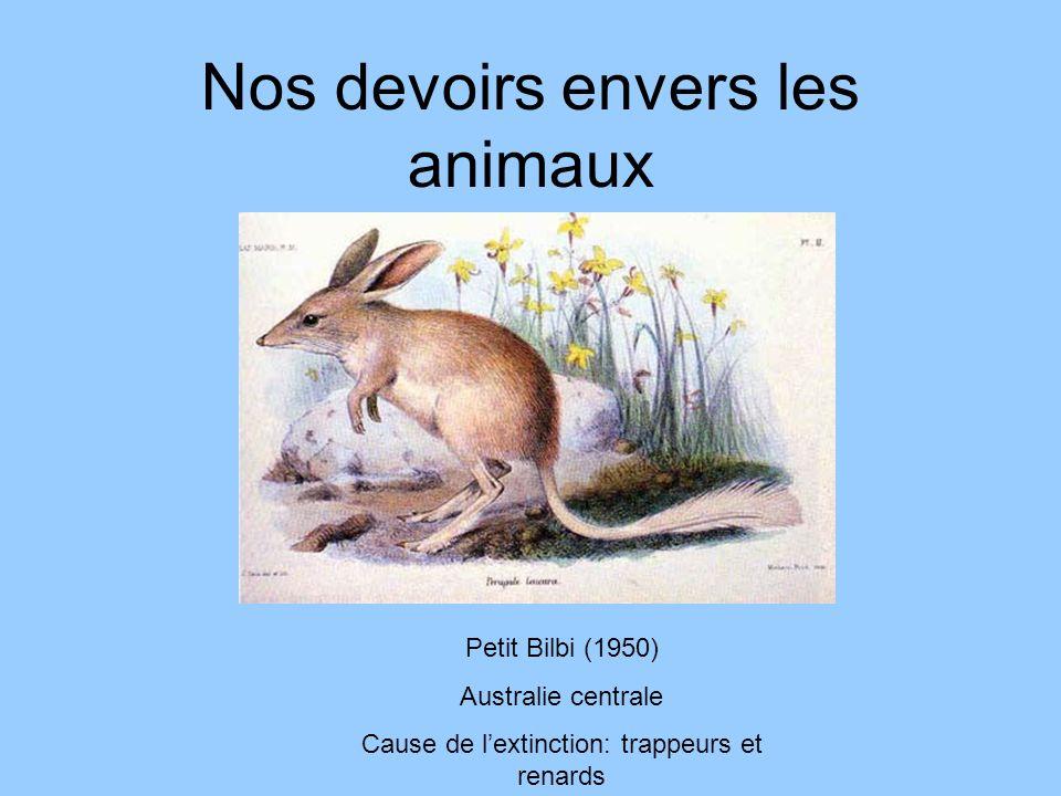 Nos devoirs envers les animaux Petit Bilbi (1950) Australie centrale Cause de lextinction: trappeurs et renards