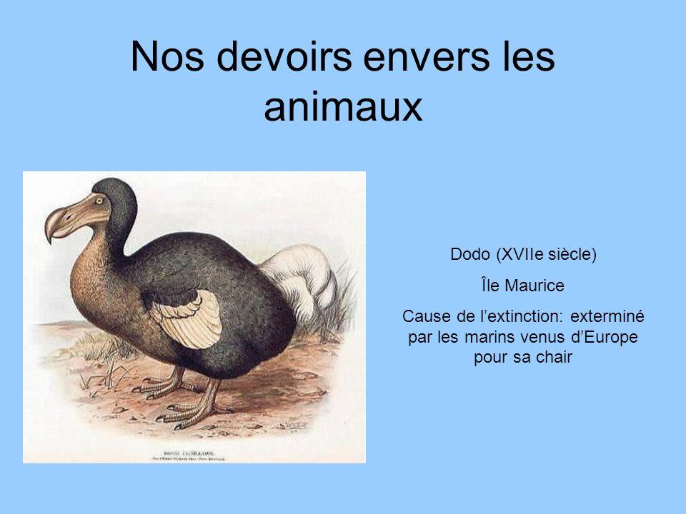 Nos devoirs envers les animaux Dodo (XVIIe siècle) Île Maurice Cause de lextinction: exterminé par les marins venus dEurope pour sa chair