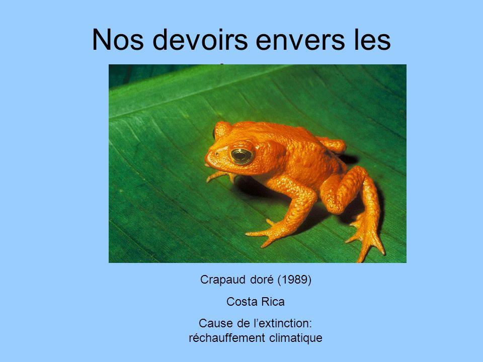 Nos devoirs envers les animaux Crapaud doré (1989) Costa Rica Cause de lextinction: réchauffement climatique