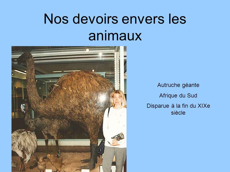 Nos devoirs envers les animaux Autruche géante Afrique du Sud Disparue à la fin du XIXe siècle