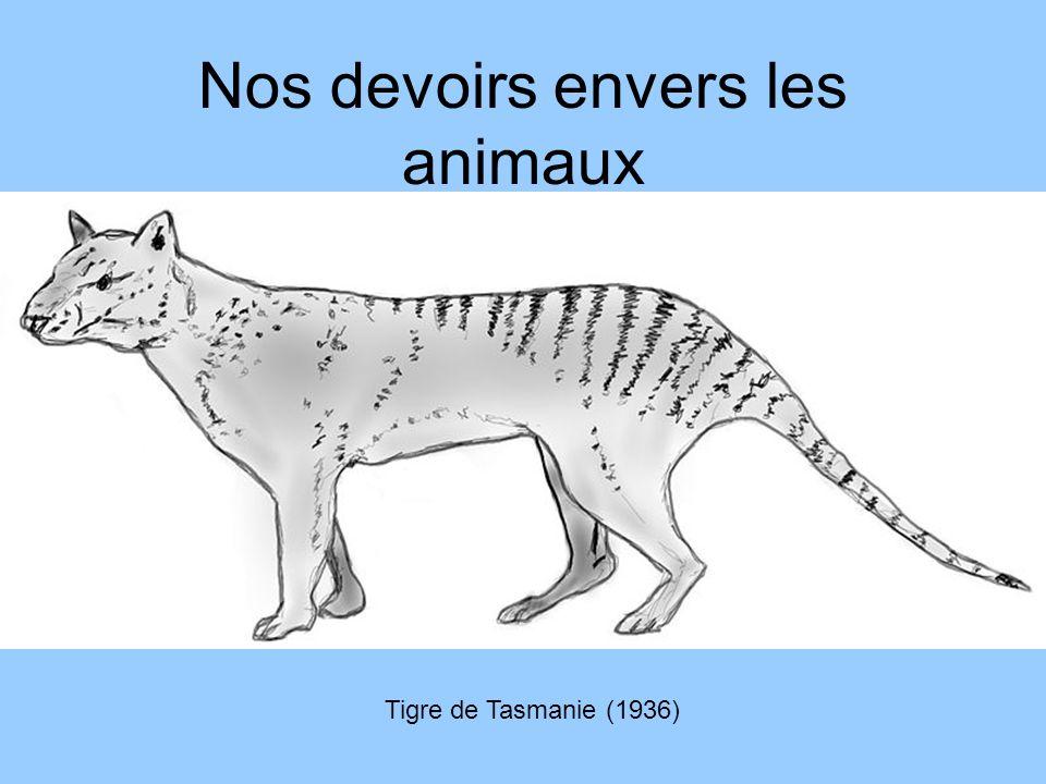 Nos devoirs envers les animaux Tigre de Tasmanie (1936)