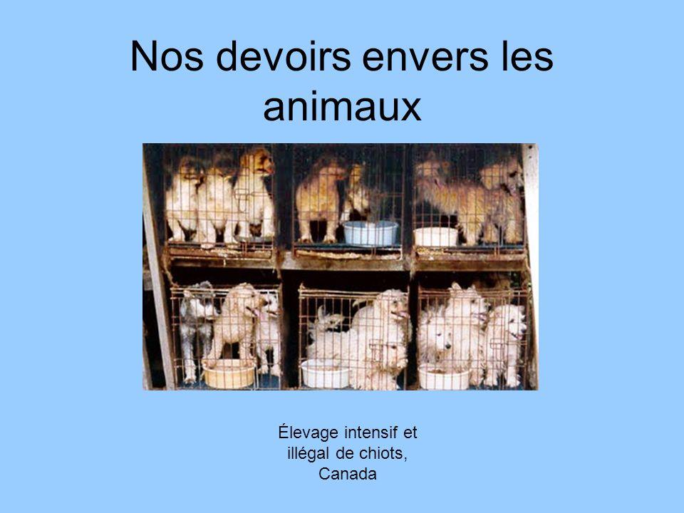 Nos devoirs envers les animaux Élevage intensif et illégal de chiots, Canada