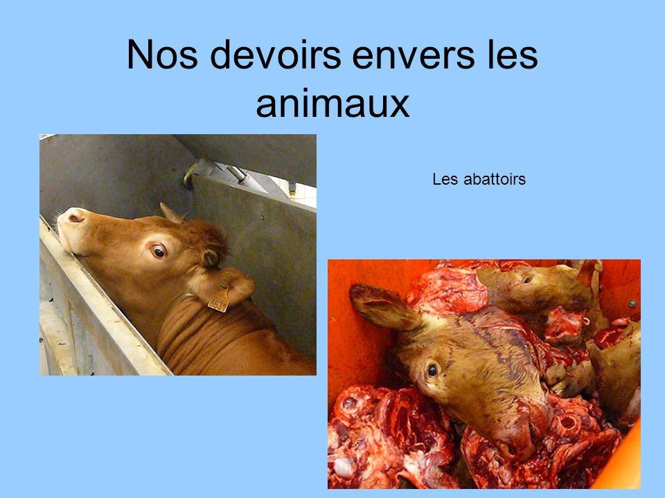 Nos devoirs envers les animaux Les abattoirs