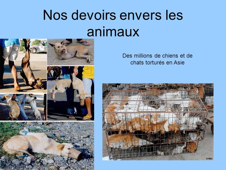 Nos devoirs envers les animaux Des millions de chiens et de chats torturés en Asie