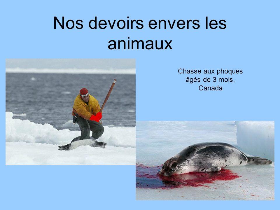 Nos devoirs envers les animaux Chasse aux phoques âgés de 3 mois, Canada