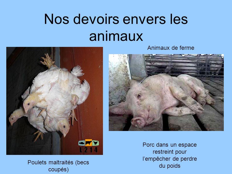 Nos devoirs envers les animaux Poulets maltraités (becs coupés) Porc dans un espace restreint pour lempêcher de perdre du poids Animaux de ferme