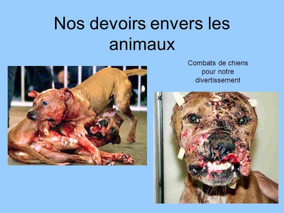 Nos devoirs envers les animaux Combats de chiens pour notre divertissement