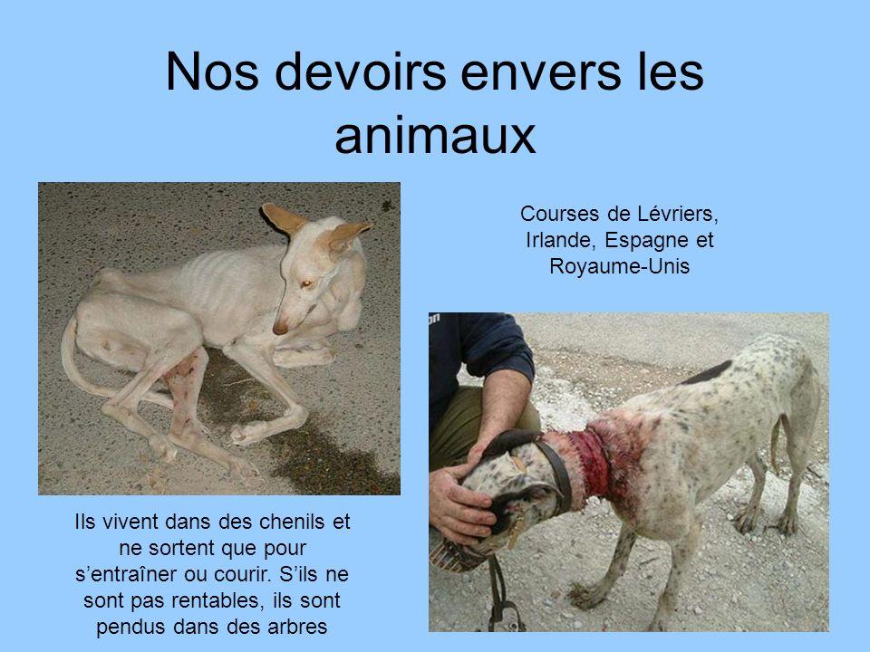 Nos devoirs envers les animaux Courses de Lévriers, Irlande, Espagne et Royaume-Unis Ils vivent dans des chenils et ne sortent que pour sentraîner ou
