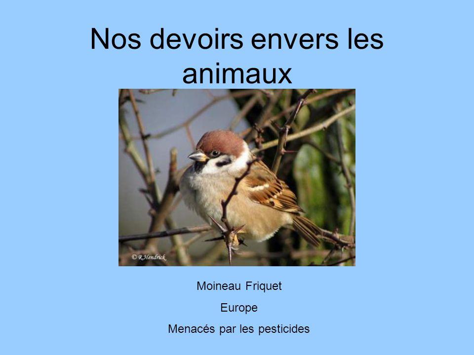 Nos devoirs envers les animaux Moineau Friquet Europe Menacés par les pesticides