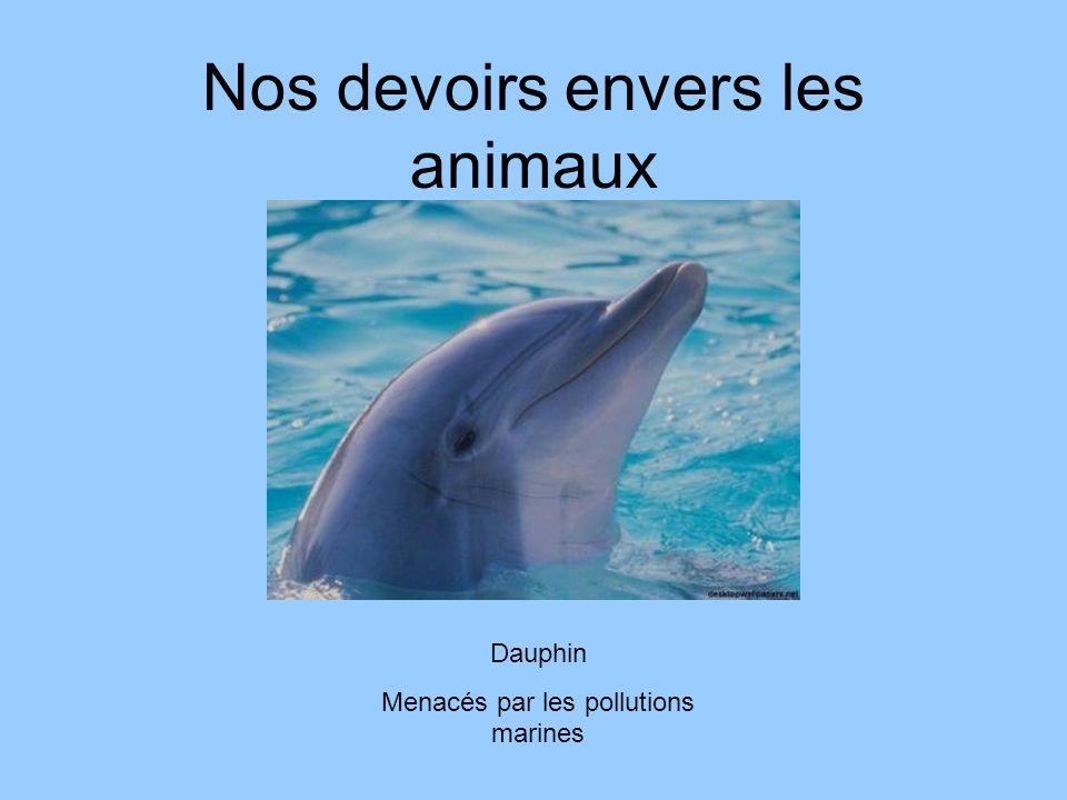 Nos devoirs envers les animaux Dauphin Menacés par les pollutions marines