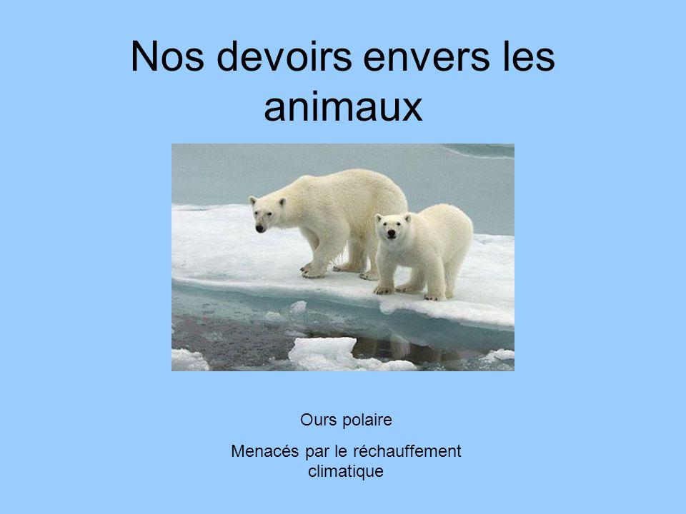 Nos devoirs envers les animaux Ours polaire Menacés par le réchauffement climatique