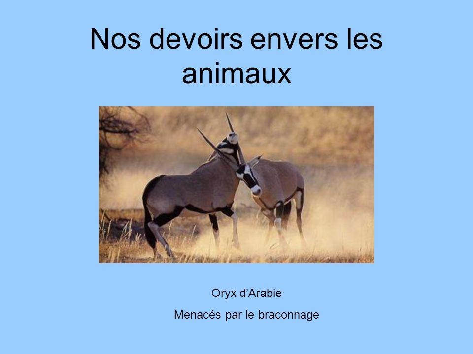 Nos devoirs envers les animaux Oryx dArabie Menacés par le braconnage