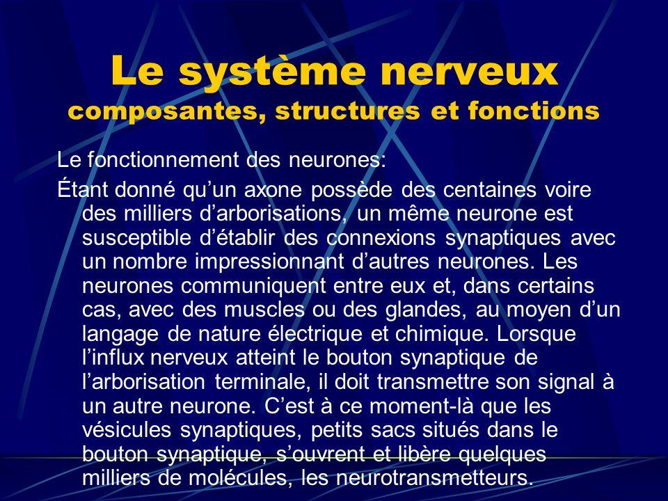 Le système nerveux composantes, structures et fonctions Le fonctionnement des neurones: Étant donné quun axone possède des centaines voire des millier