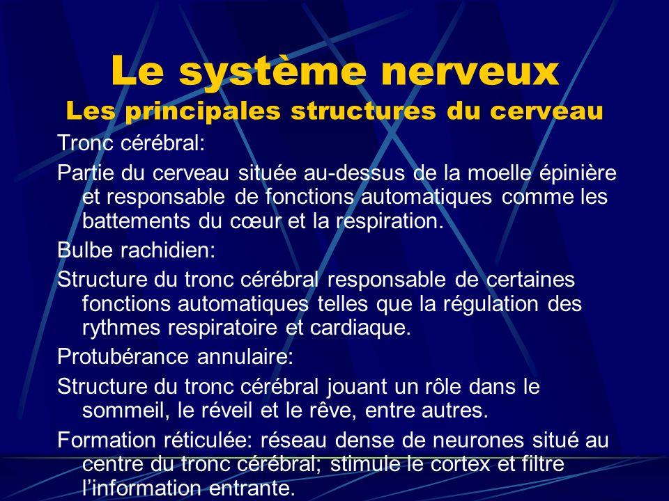 Le système nerveux Les principales structures du cerveau Tronc cérébral: Partie du cerveau située au-dessus de la moelle épinière et responsable de fo