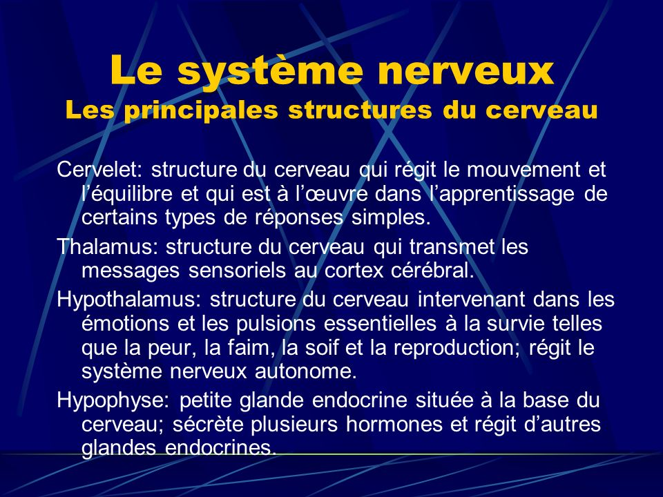 Le système nerveux Les principales structures du cerveau Cervelet: structure du cerveau qui régit le mouvement et léquilibre et qui est à lœuvre dans