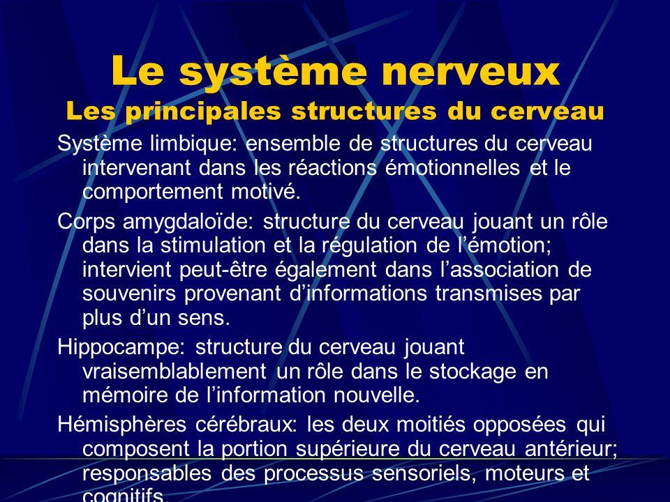 Le système nerveux Les principales structures du cerveau Système limbique: ensemble de structures du cerveau intervenant dans les réactions émotionnel