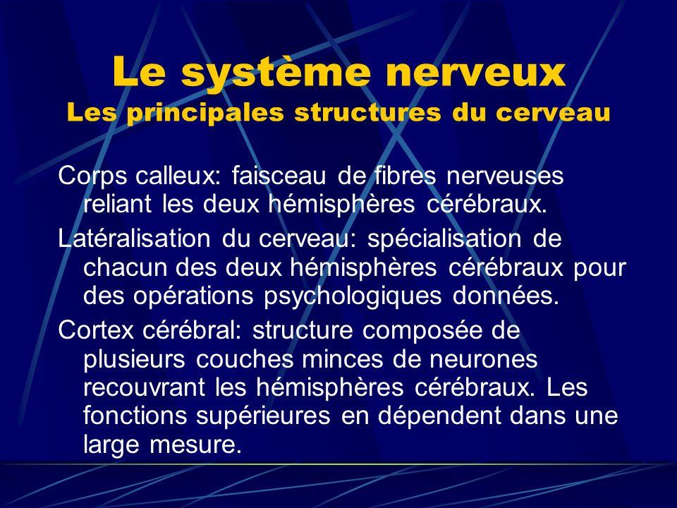 Le système nerveux Les principales structures du cerveau Corps calleux: faisceau de fibres nerveuses reliant les deux hémisphères cérébraux. Latéralis