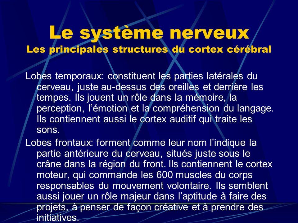 Le système nerveux Les principales structures du cortex cérébral Lobes temporaux: constituent les parties latérales du cerveau, juste au-dessus des or