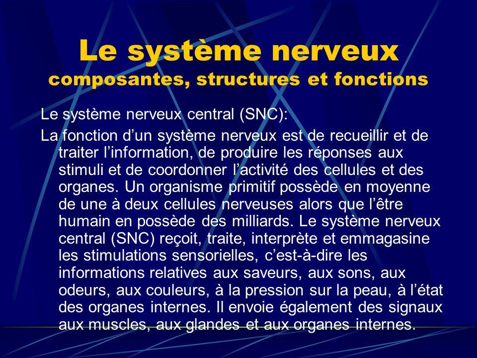 Le système nerveux composantes, structures et fonctions Le système nerveux central (SNC): La fonction dun système nerveux est de recueillir et de trai