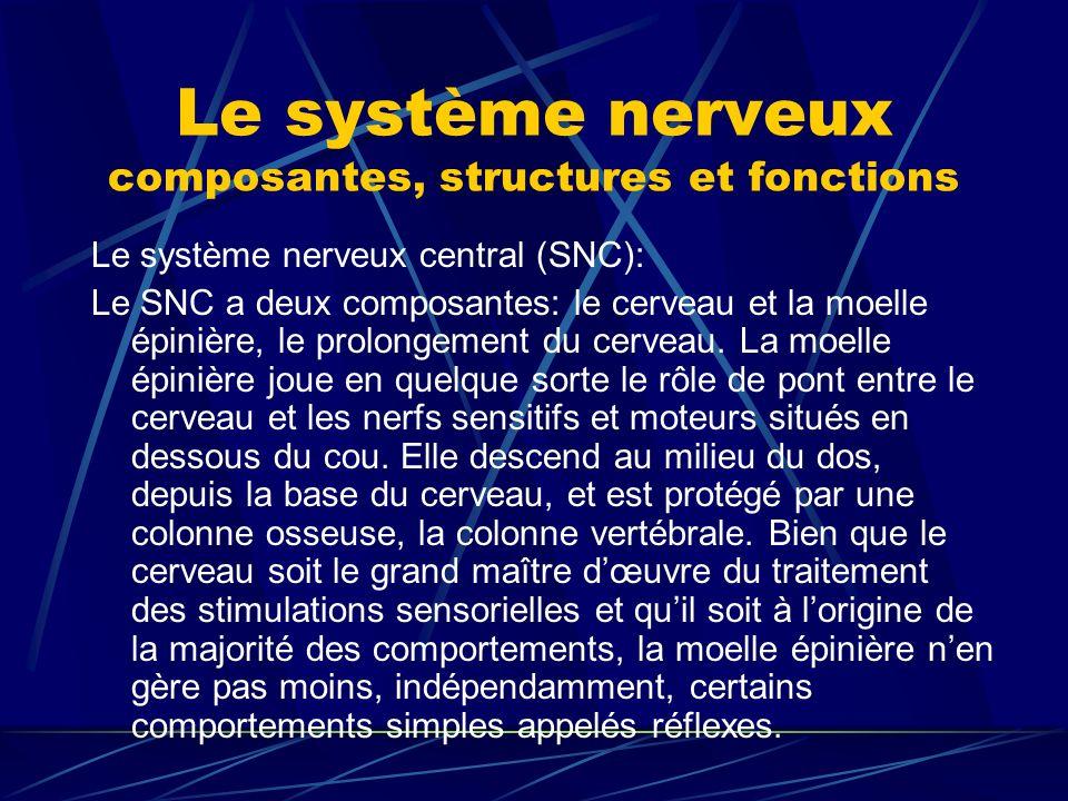 Le système nerveux composantes, structures et fonctions Le système nerveux central (SNC): Le SNC a deux composantes: le cerveau et la moelle épinière,
