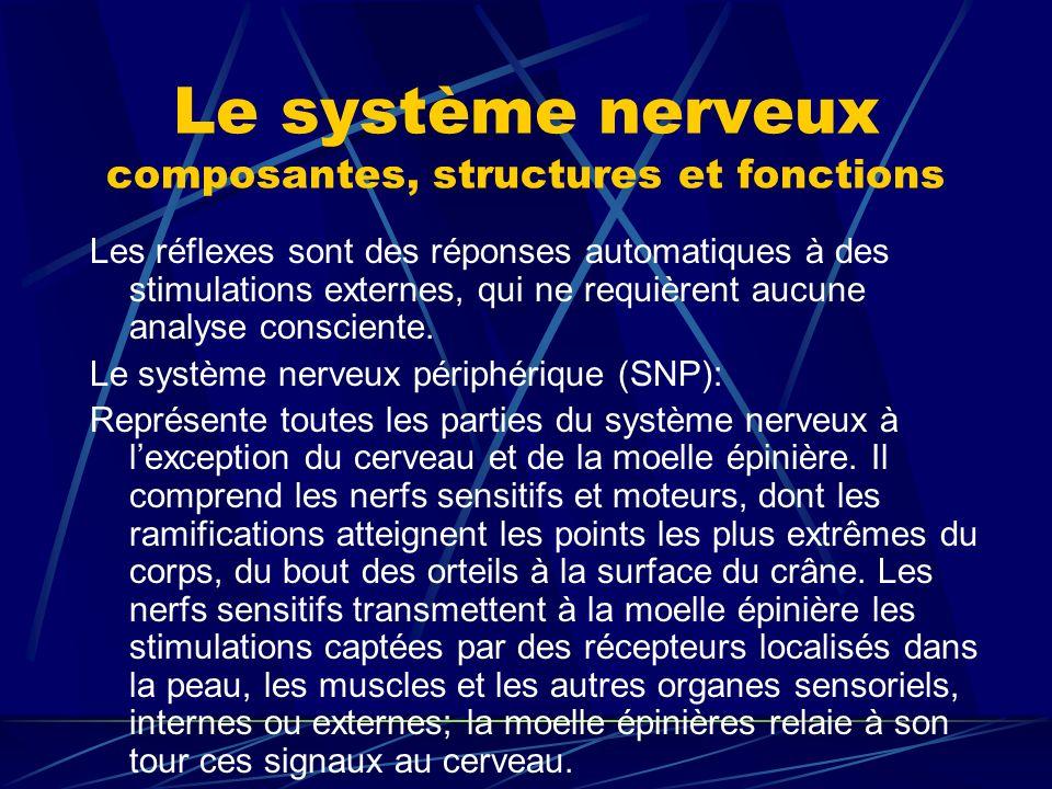 Le système nerveux composantes, structures et fonctions Les réflexes sont des réponses automatiques à des stimulations externes, qui ne requièrent auc