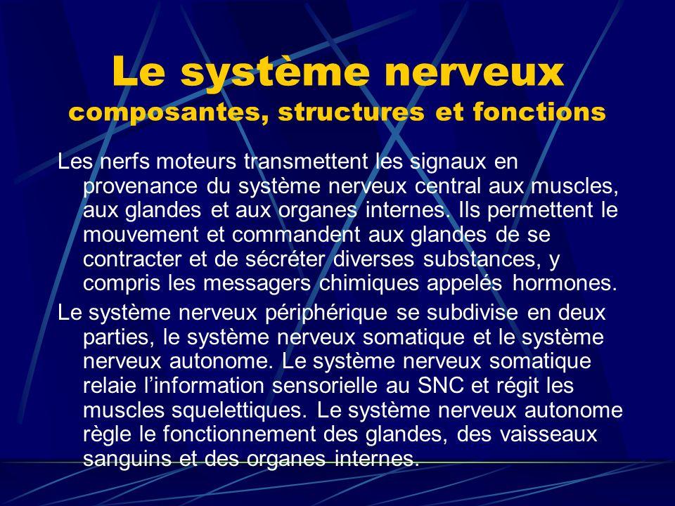 Le système nerveux composantes, structures et fonctions Les nerfs moteurs transmettent les signaux en provenance du système nerveux central aux muscle