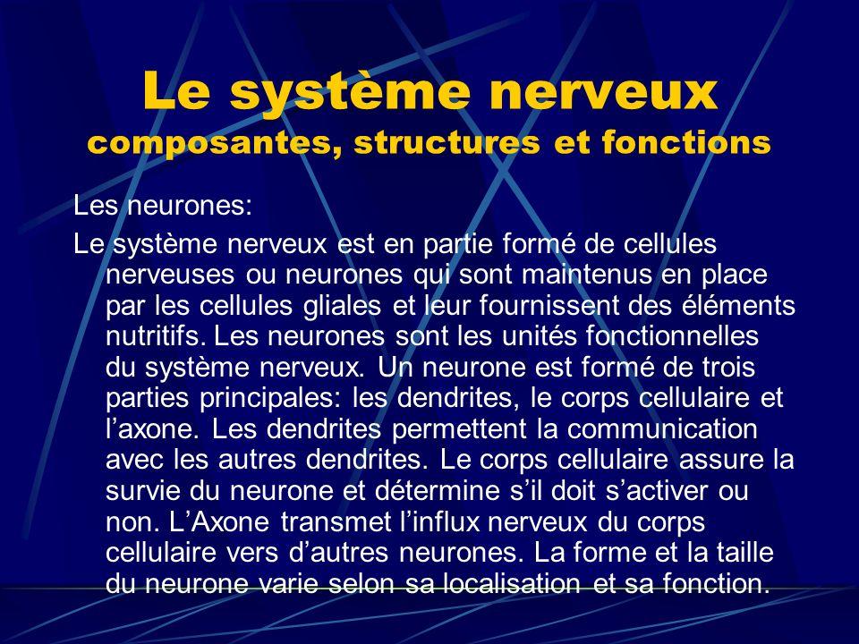 Le système nerveux composantes, structures et fonctions Les neurones: Le système nerveux est en partie formé de cellules nerveuses ou neurones qui son