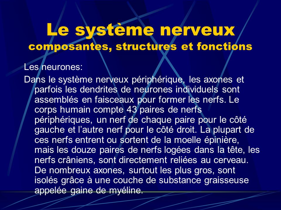 Le système nerveux composantes, structures et fonctions Les neurones: Dans le système nerveux périphérique, les axones et parfois les dendrites de neu