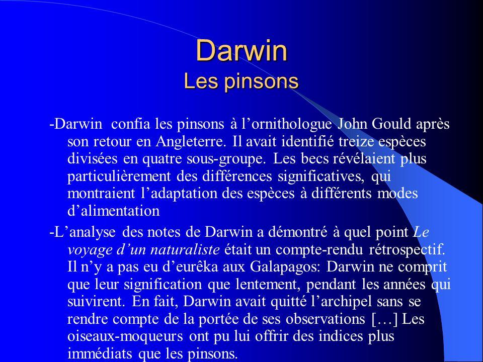 Darwin Les pinsons -Darwin confia les pinsons à lornithologue John Gould après son retour en Angleterre. Il avait identifié treize espèces divisées en