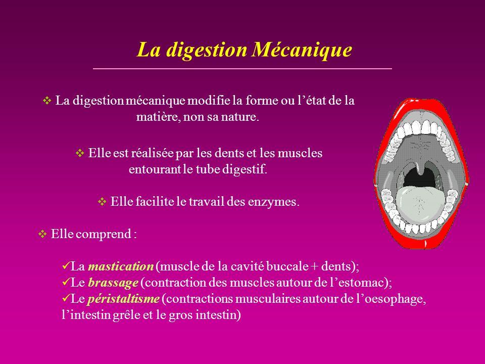 La digestion Mécanique La digestion mécanique modifie la forme ou létat de la matière, non sa nature. Elle est réalisée par les dents et les muscles e