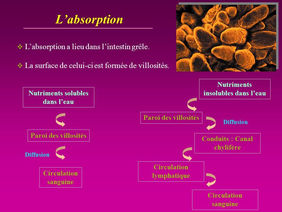 Labsorption Labsorption a lieu dans lintestin grêle. La surface de celui-ci est formée de villosités. Circulation sanguine Paroi des villosités Nutrim