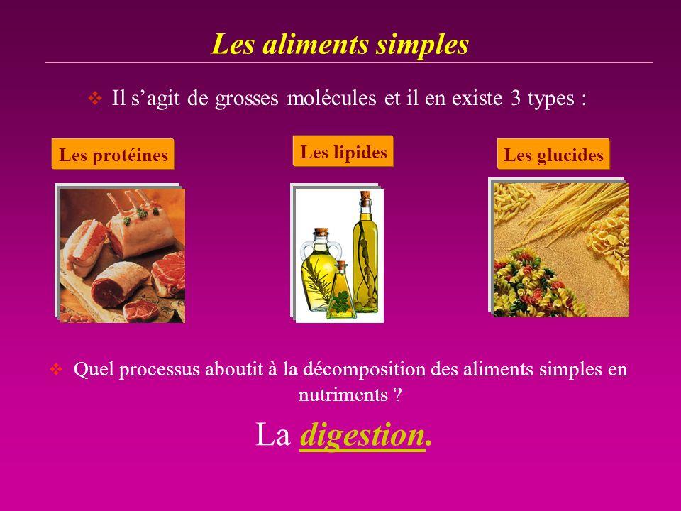 Les aliments simples Il sagit de grosses molécules et il en existe 3 types : Les protéines Les lipides Les glucides Quel processus aboutit à la décomp