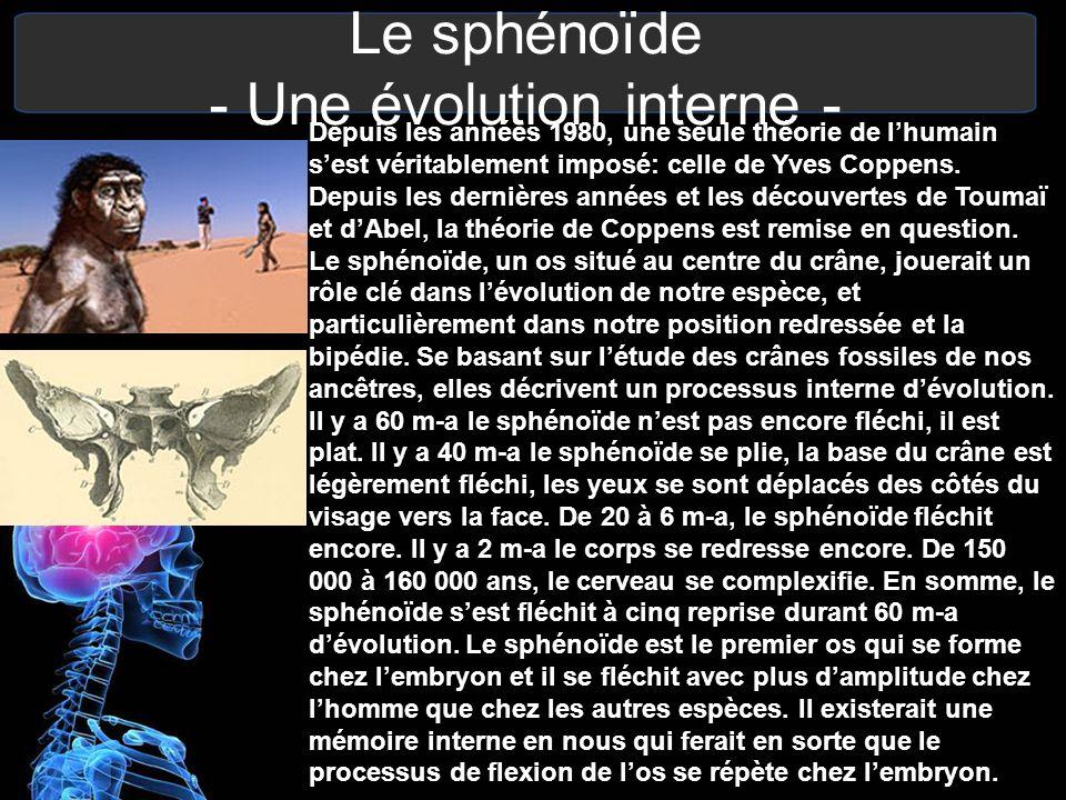 Le sphénoïde - Une évolution interne - Depuis les années 1980, une seule théorie de lhumain sest véritablement imposé: celle de Yves Coppens. Depuis l