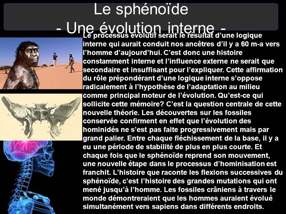 Le sphénoïde - Une évolution interne - Le processus évolutif serait le résultat dune logique interne qui aurait conduit nos ancêtres dil y a 60 m-a ve