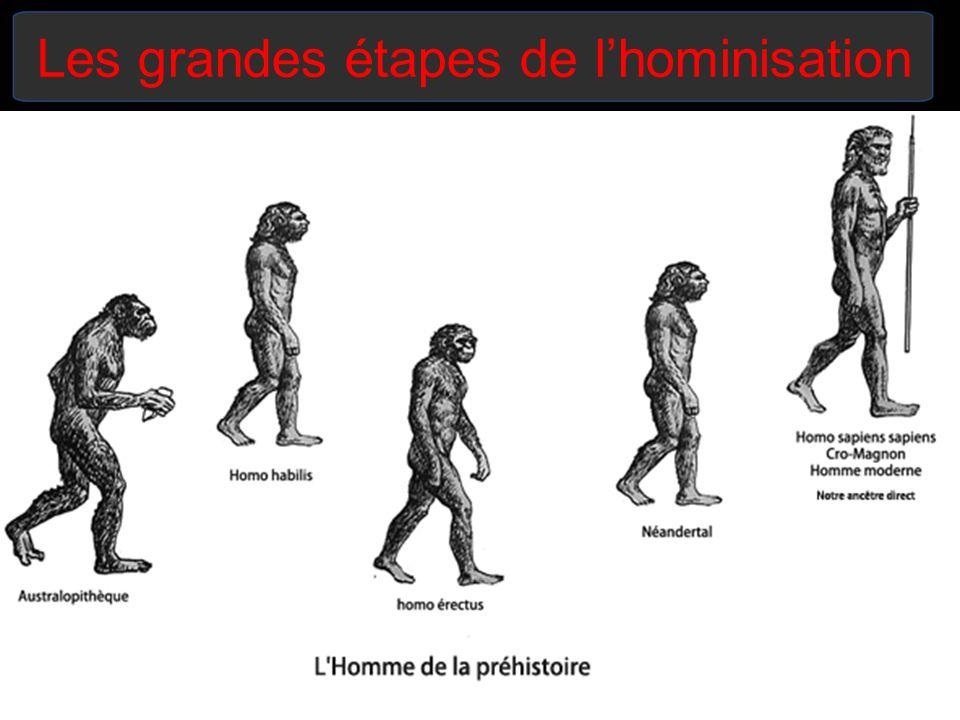 Homo australopithecus (4-2 millions dannées) - Laustralopithèque comprend les espèces suivantes: Ramidus, Afarensis, Africanus, Robustus et Bosei.