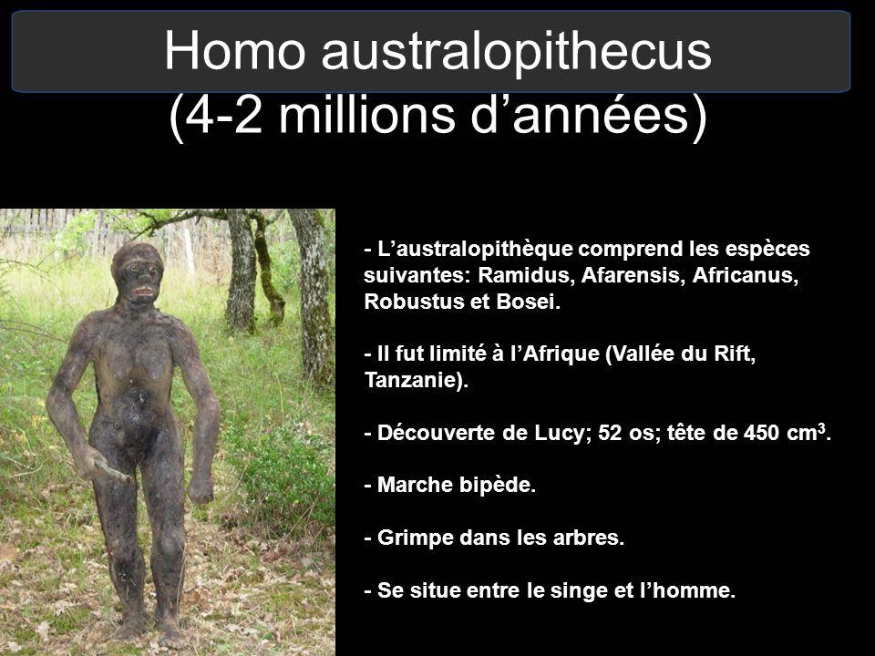 Homo australopithecus (4-2 millions dannées) - Laustralopithèque comprend les espèces suivantes: Ramidus, Afarensis, Africanus, Robustus et Bosei. - I