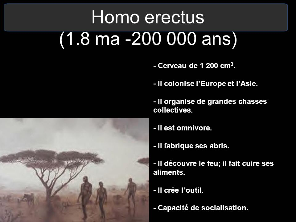 Homo erectus (1.8 ma -200 000 ans) - Cerveau de 1 200 cm 3. - Il colonise lEurope et lAsie. - Il organise de grandes chasses collectives. - Il est omn