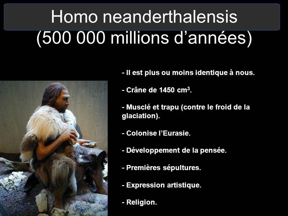 Homo neanderthalensis (500 000 millions dannées) - Il est plus ou moins identique à nous. - Crâne de 1450 cm 3. - Musclé et trapu (contre le froid de