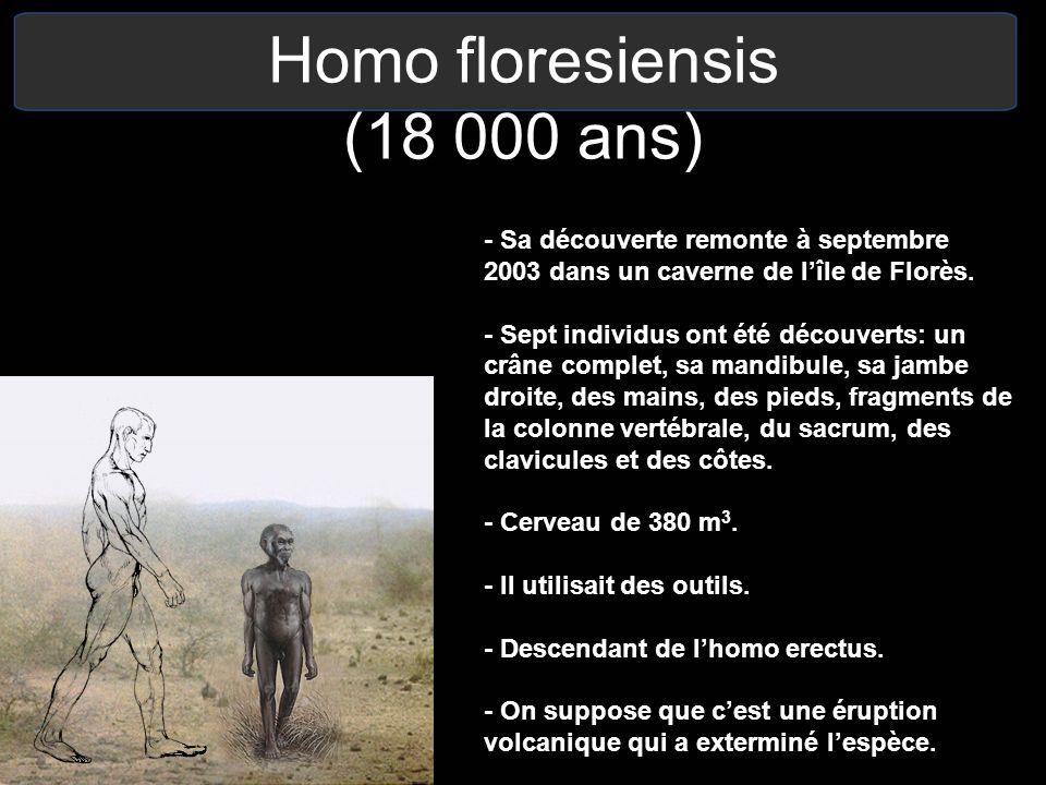 Homo floresiensis (18 000 ans) - Sa découverte remonte à septembre 2003 dans un caverne de lîle de Florès. - Sept individus ont été découverts: un crâ