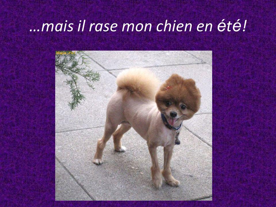 …mais il rase mon chien en é t é !