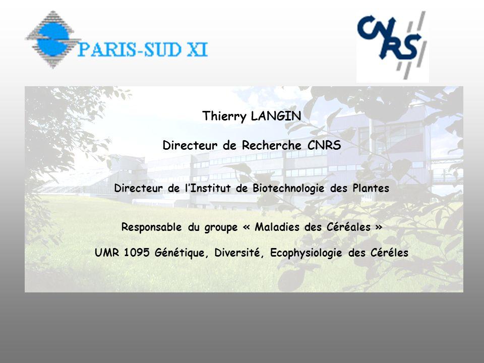 Thierry LANGIN Directeur de Recherche CNRS Directeur de lInstitut de Biotechnologie des Plantes Responsable du groupe « Maladies des Céréales » UMR 10