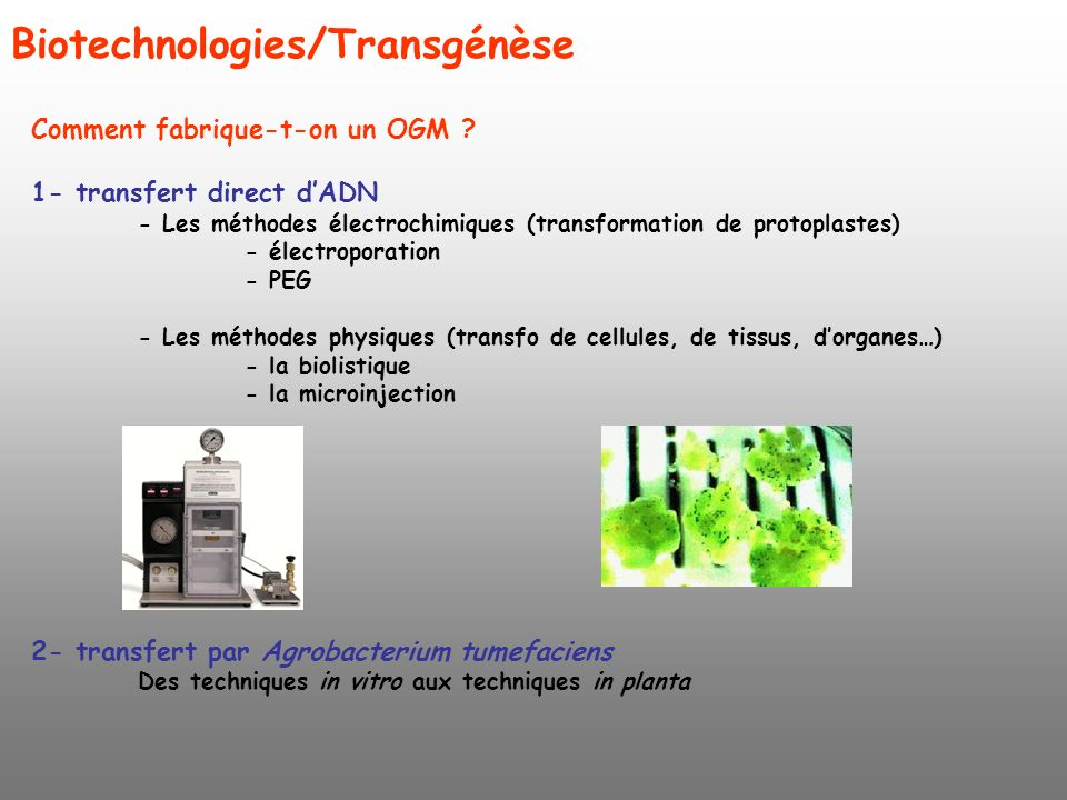 Biotechnologies/Transgénèse Comment fabrique-t-on un OGM ? 1- transfert direct dADN - Les méthodes électrochimiques (transformation de protoplastes) -